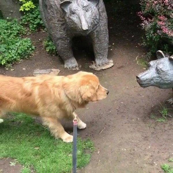 Cachorro intrigado com estatuas de animais, tadinho olha só o medo!!!