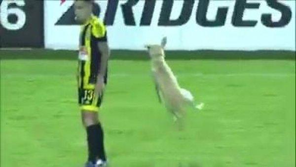 Cachorro invade campo de futebol, a felicidade é contagiante!!!