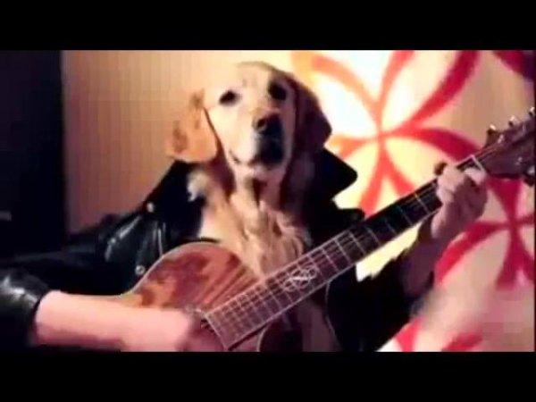 Cachorro pintor, escritor, químico, cozinheiro e músico, um video legal!