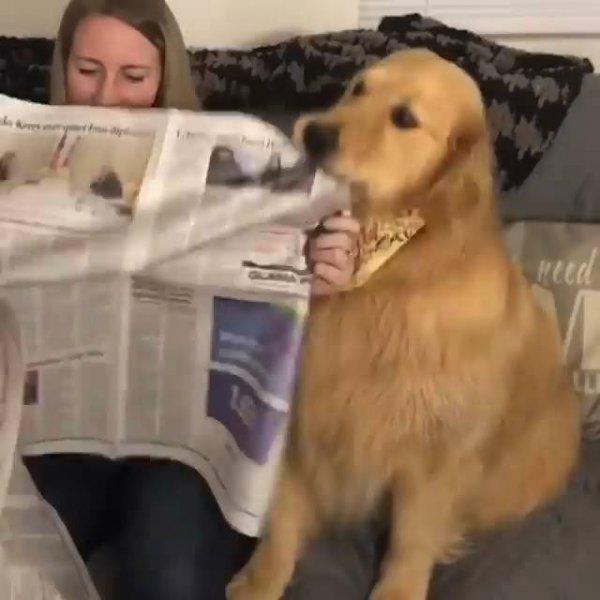 Cachorro querendo atenção da mamãe que esta lendo o jornal!