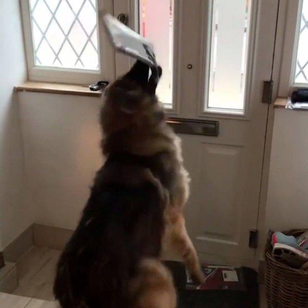 Cachorro recebendo as cartas do correio, olha só o que ele apronta!!!