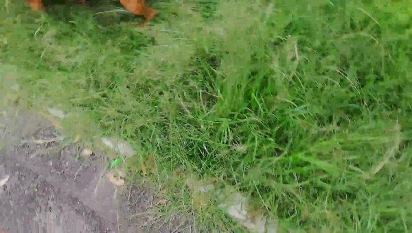 Cachorro se divertindo na grama, ele parece gostar dessa bagunça toda!