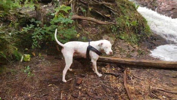 Cachorro tirando tronco de árvore da água, como ele é forte e ágil!