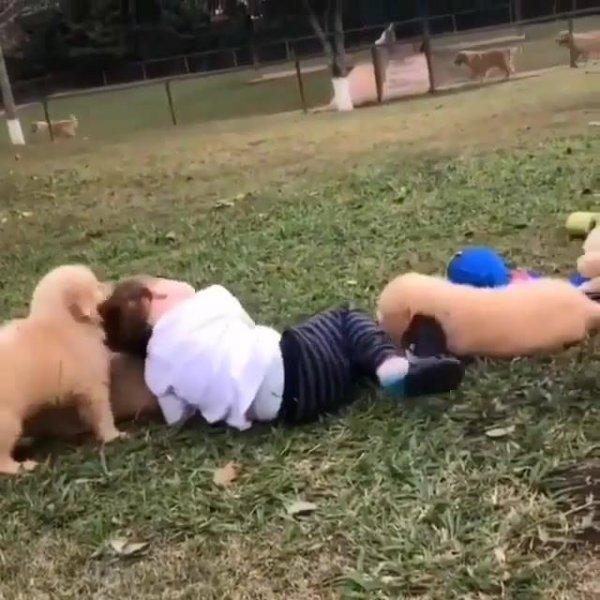 Cachorros atacando uma criança, mas é um ataque de fofura, confira!