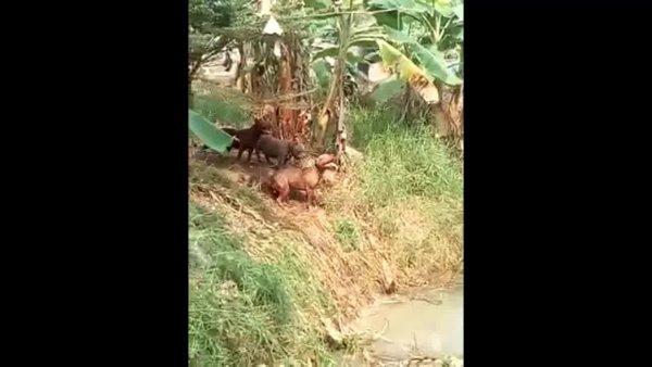 Cachorros brincando de pular na água, parecem crianças se divertindo!!!