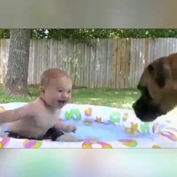 Cachorros, os melhores amigos de um bebê, é diversão na certa hahaha!