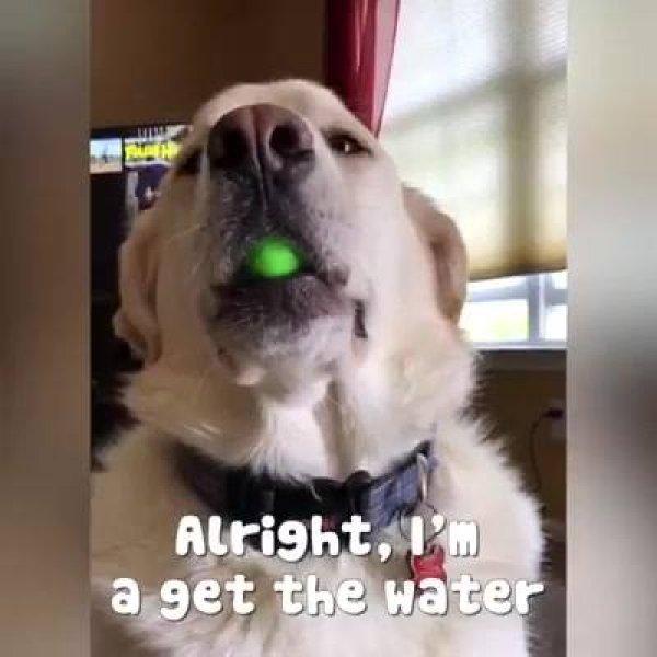 Cachorros que são mais inteligentes do que a gente imagina!
