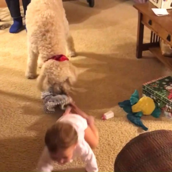 Cachorros se divertindo com crianças, uma linda amizade!