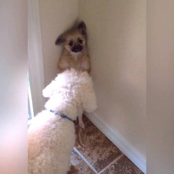 Cães como não amar estes animais que só nos trazem sorrisos!!!