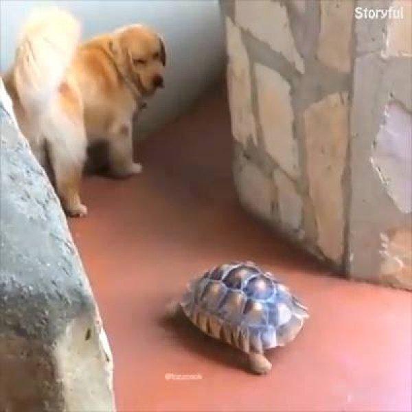 Cães cuidando de outros animais, como não amar esta especie cheia de amor!!!