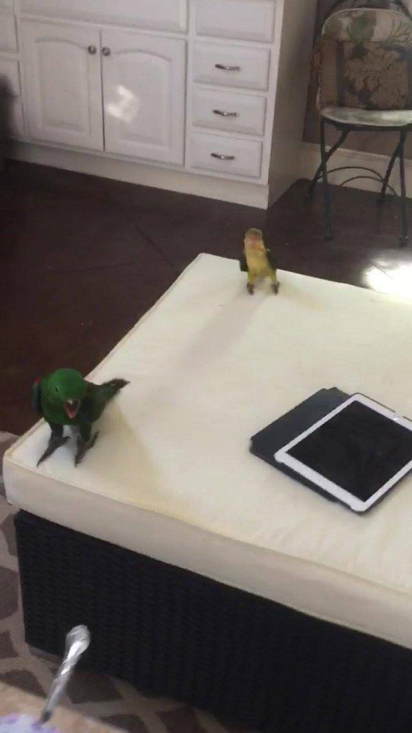 Casa cheia de pássaros, esses animais enche a casa de alegria!