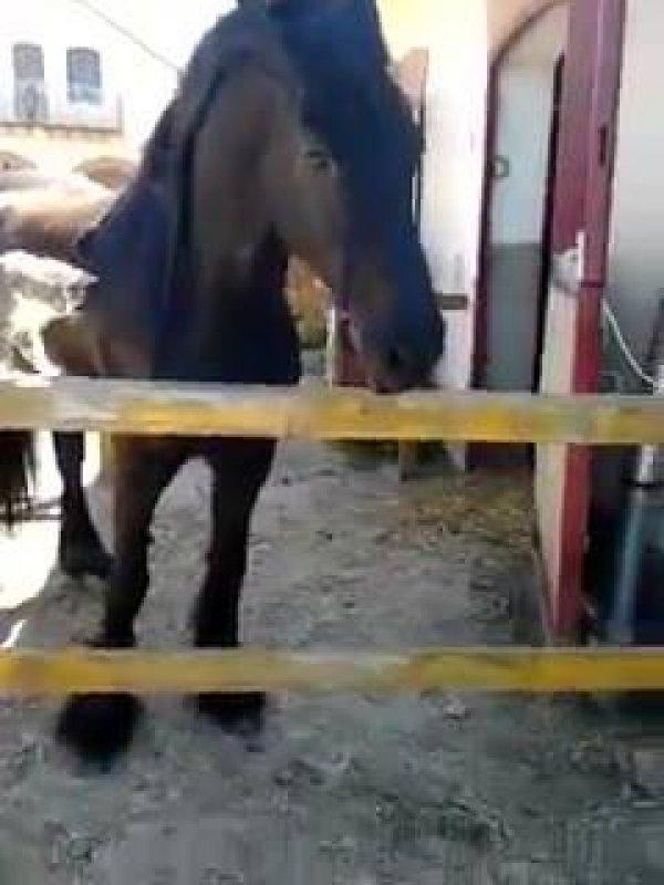 Cavalo amigo de gato, essa amizade é inusitada e... Linda!
