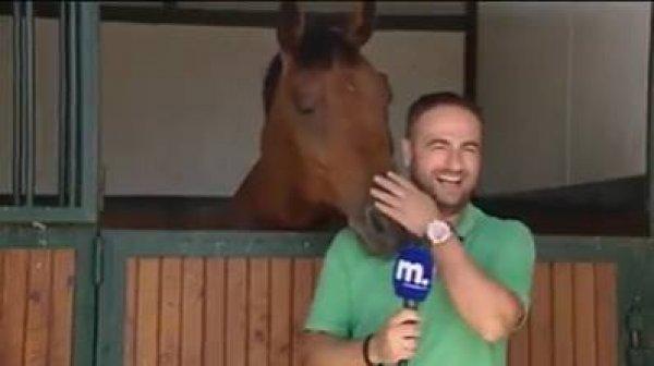 Cavalo não deixa repórter falar ao microfone, muito engraçado, kkk!!!