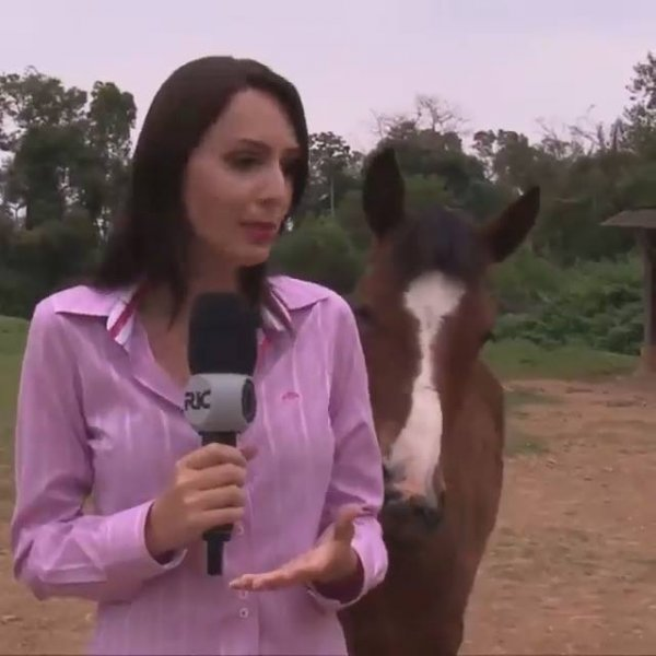Cavalos atrapalham entrevista de repórter, para rir muito hahaha!