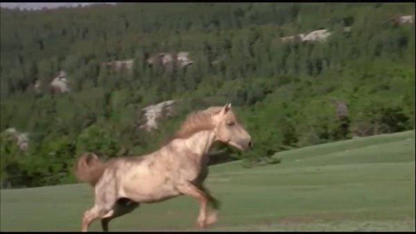 Cavalos correndo no campo, são linda as imagens a seguir!