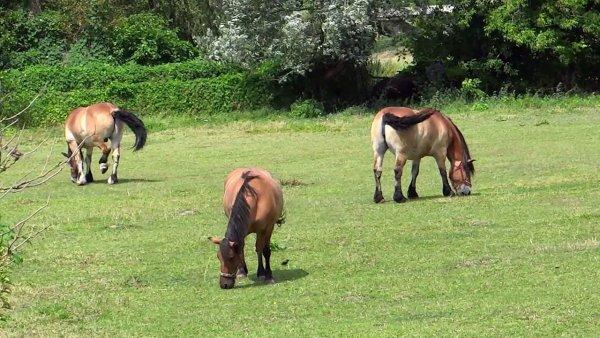 Cavalos lindos no campo, para quem é fã deste animal, da só uma olhada!!!