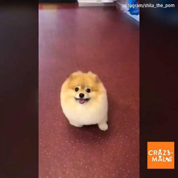 Cenas de animais - Cachorros e gatos fazendo coias engraçadas!