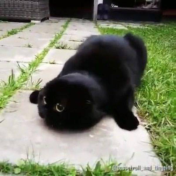 Coisas engraçadas que só os gatos são capazes de fazer, vamos rir muito!