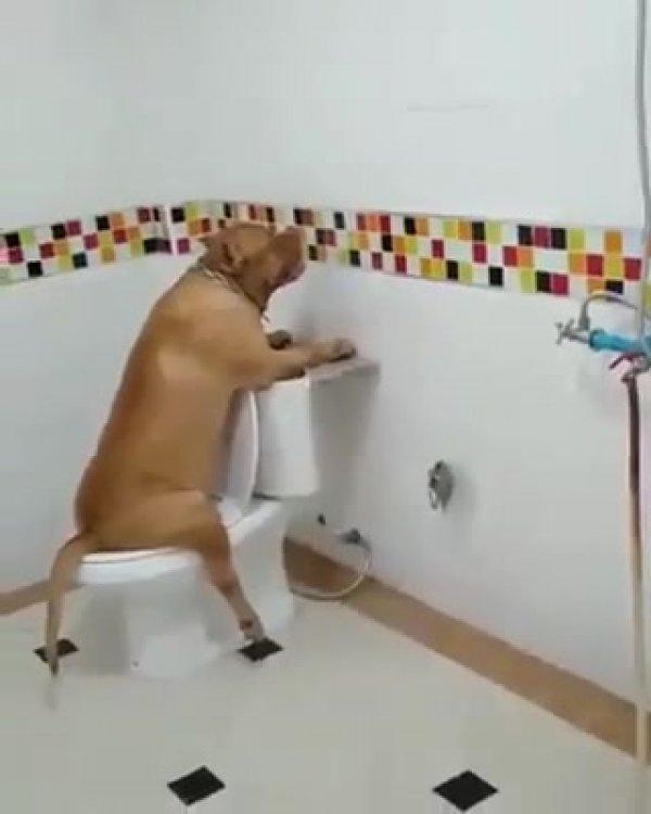 Como dar risadas com os animais? Basta assistir a esse video hahaha!