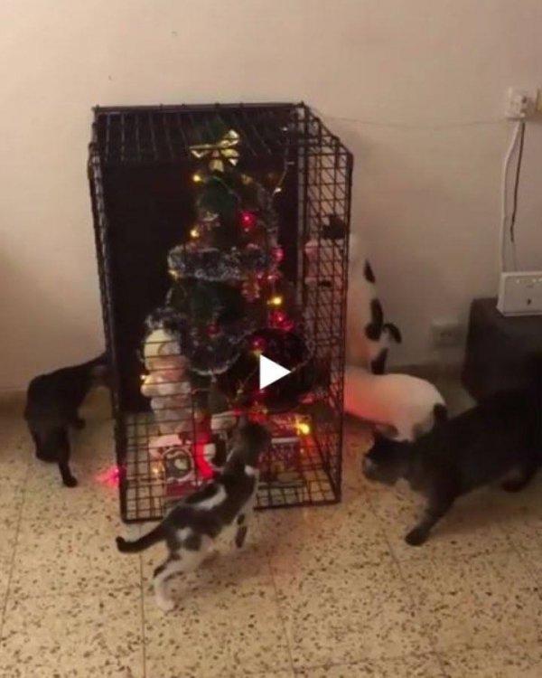 Como manter a árvore de natal em pé quando se tem gatos em casa?
