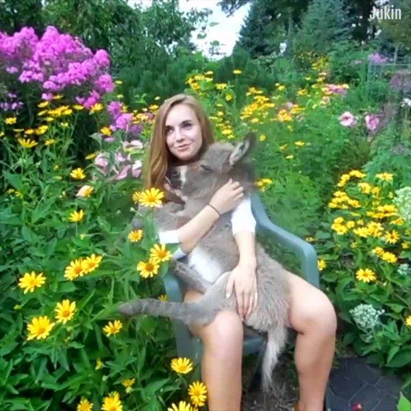 Compilação de cenas de animais e humanos em puro amor e carinho!