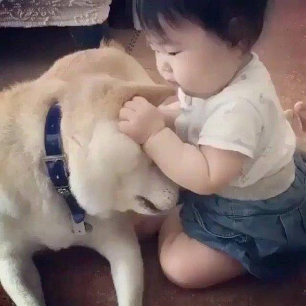 Criança mordendo a orelha do cachorro, por isso tem que ficar de olho!