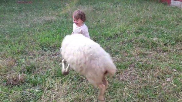 Criança se divertindo com uma cabra, ela parece estar gostando muito!
