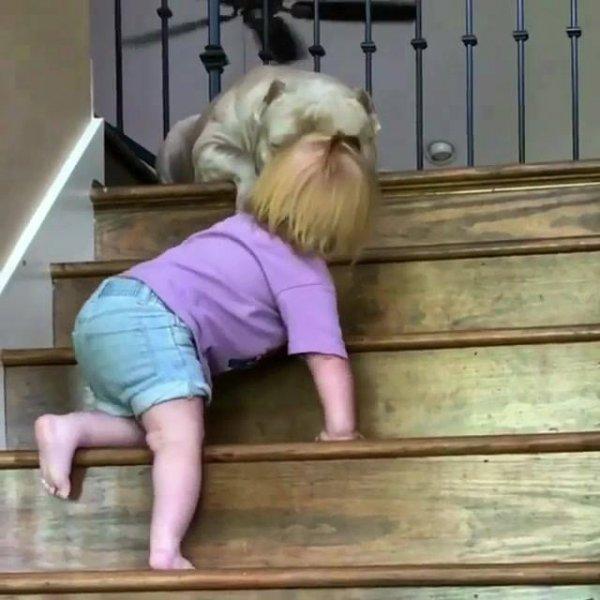 Criança sobe as escadas para dar carinho a um cachorro, que fofura!