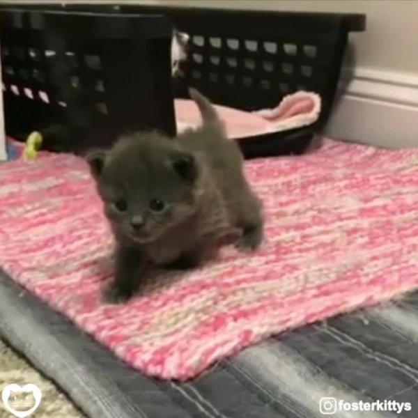 Duas fofuras de gatinhos para você admirar, você vai amar essas fofuras!