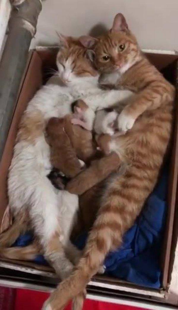 Duas gatas com seus filhotes, as amigas resolveram engravidar na mesma época!