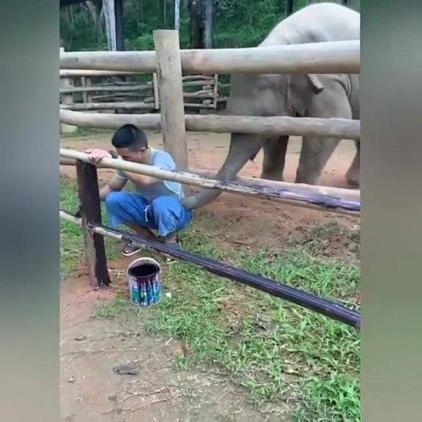 Elefante tentando fazer amizade com o pintor, veja que cena mais fofa!
