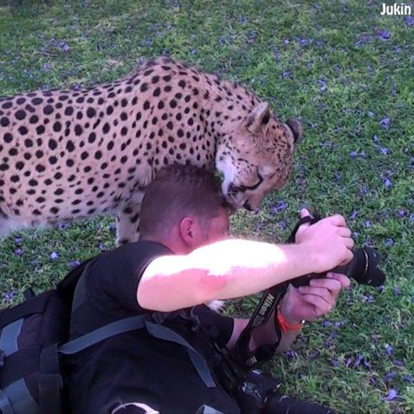 Encontros com a natureza mais surpreendentes, os animais nos fascinam!