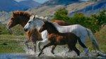 Esse vídeo de animais, reuniu as imagens dos mais lindos cavalos!!!