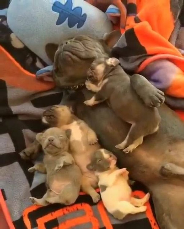 Família canina dormindo profundamente, quem tem coragem de acordar eles?