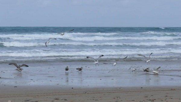 Família de pássaros na praia, até eles se refrescando e você ai no computador!