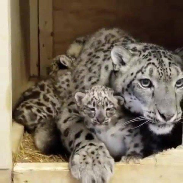 Família felina mais linda do dia, veja quanta beleza rara em um lugar só!