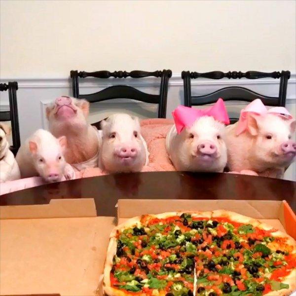 Família reunida para comer uma pizza, olha só que coisinha mais fofinha!!!