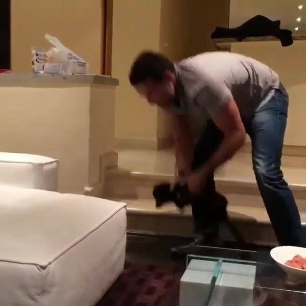 Felino filhote lançando sem medo do papai humano não pegá-lo!
