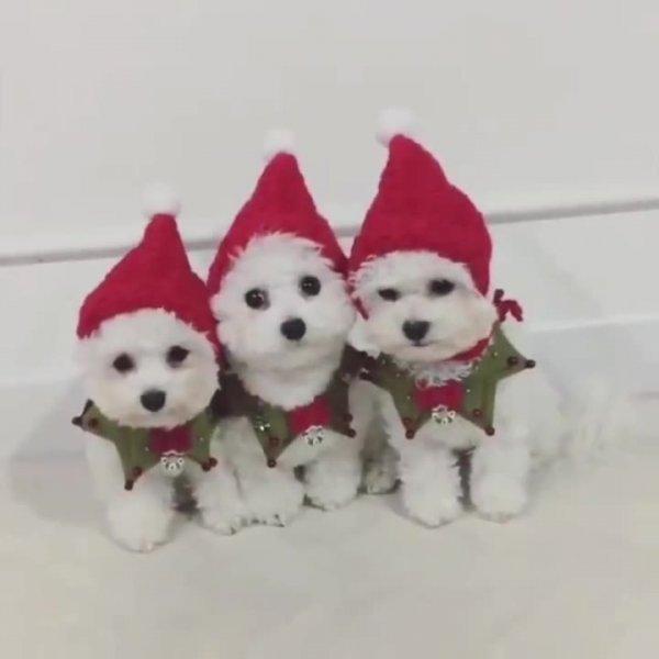 Feliz Natal especial com estes três amiguinho fantasiados no clima natalino!!!