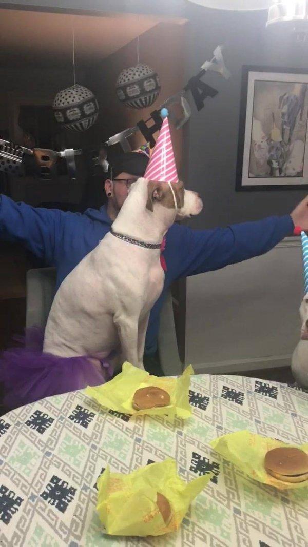 Festa de aniversário canina, as crianças querer comer, hahaha!