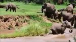 Filhote de elefante sendo arrastado no rio, mas veja o que acontece!!!
