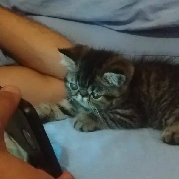 Filhote de gato assistindo vídeo no celular, olha só a carinha dele!!!