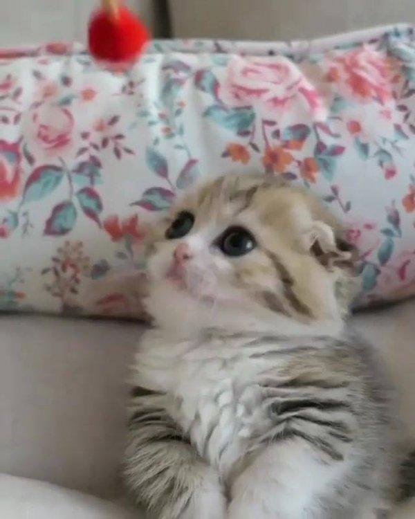 Filhote de gato brincando com bolinha, estas patinhas são encantadoras!!!