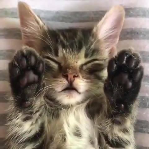 Filhote de gato dormindo de barriguinha para cima, veja estas patinhas!!!