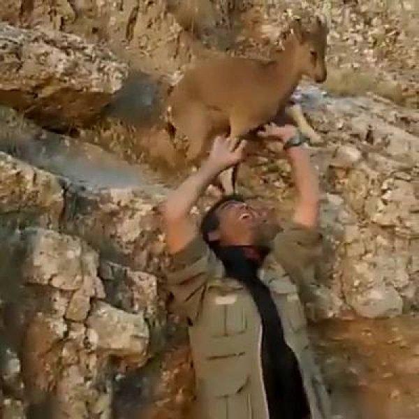 Filhote de servo tentando ajudar humano, veja que imagens fofas!