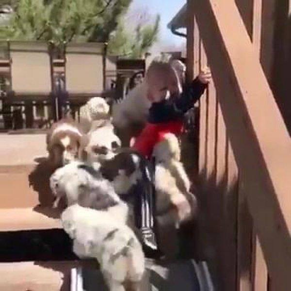 Filhotes de cachorro brincando com um bebê na escada, que cena mais linda!