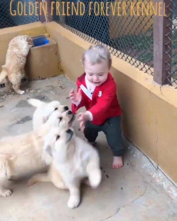 Filhotes de cachorros brincando com uma criança, é muito lindo de ver!