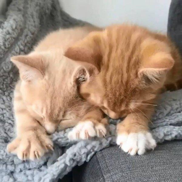 Filhotes de gatinho mamando na coberta, olha só que coisinha mais fofa!!!