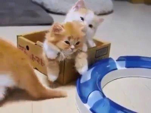 Filhotes de gatinhos brincando entre si, olha só que coisinha mais lindas!!!