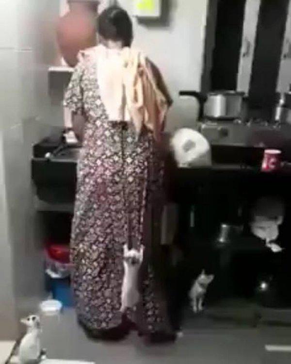 Filhotes de gatos escalando dona para chegar na pia da cozinha, hahaha!!!
